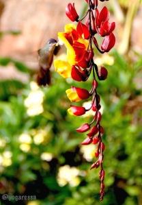 Yoga-retreat-guatemala-hummingbird