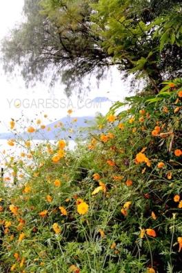 lake-atitlan-flowers-7241