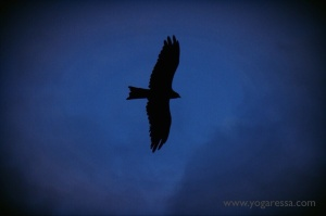 Eagle-McLeod-Ganj
