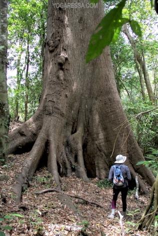 IMG_0369-costa-rica-tree