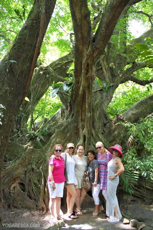 IMG_0593-yogaressa-costa-rica-tree
