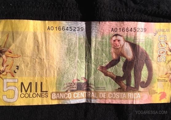 IMG_6990-yogaressa-costa-rica-colones